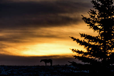 Photograph - Silhouette Of A Horse Standing by Deb Garside