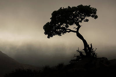 Silhouette Of A Tree Against A Stormy Art Print by Robert Postma