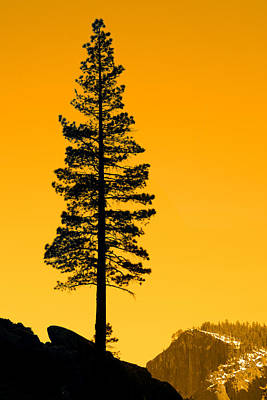 Photograph - Silhouette Of A Tree by Celso Diniz