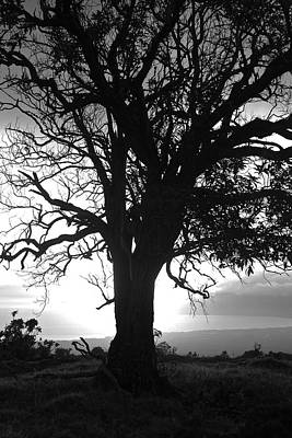 Silhouette Of A Tree At Sunset Original