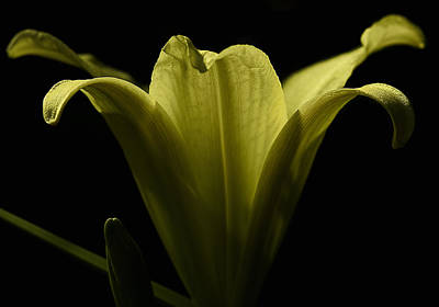 Photograph - Silhouette Of An Iris by Gary Neiss