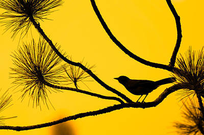Photograph - Silhouette Of Bird Against Orange Sky by Celso Diniz