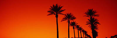 In A Row Photograph - Silhouette Of Date Palm Trees In A Row by Panoramic Images