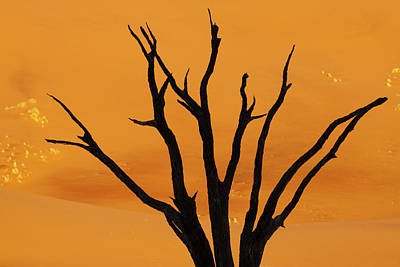Bare Trees Photograph - Silhouette Of Dead Tree Against Sand by Jaynes Gallery