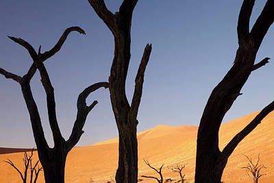 Bare Trees Photograph - Silhouette Of Dead Tree And Sand Dunes by Jaynes Gallery