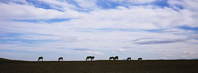 Silhouette Of Horses In A Field Art Print
