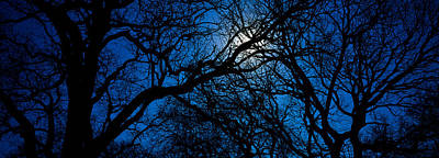 Quercus Photograph - Silhouette Of Oak Trees, Texas, Usa by Panoramic Images