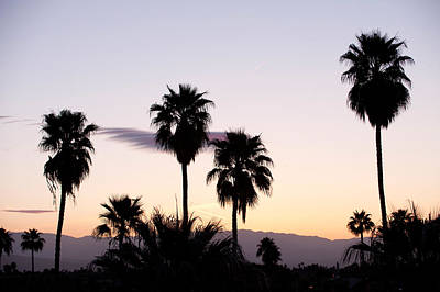Palm Springs Photograph - Silhouette Of Palm Trees At Dusk, Palm by Panoramic Images