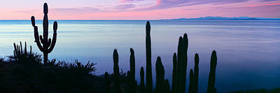 Silhouette Of Pitaya And Cardon Cactus Art Print