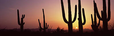 Silhouette Of Saguaro Cacti Carnegiea Art Print by Panoramic Images