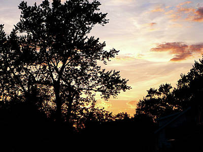 Silhouette Photograph - Silhouette Of Trees At Sunset by Susan Savad