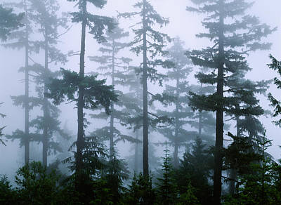 Olympic National Park Photograph - Silhouette Of Trees With Fog by Panoramic Images