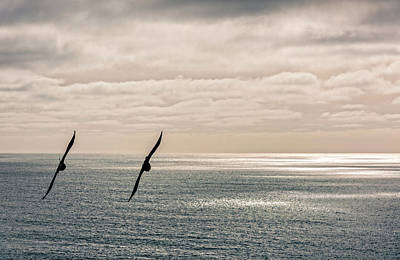 Pacifica Photograph - Silhouette Of Two Crows Flying by Panoramic Images