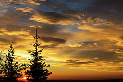 Tree In Golden Light Photograph - Silhouette Of Two Evergreen Trees by Michael Interisano