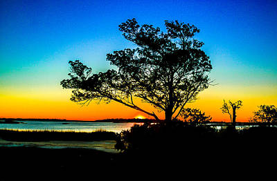 Photograph - Silhouette Tree Sunrise by Ed Roberts