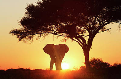 Silhouetted African Elephant At Sunset Art Print by Lost Horizon Images