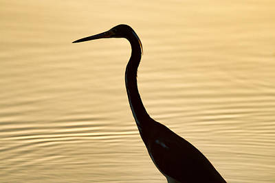 Photograph - Silhouetted Bird At Sunset by Celso Diniz