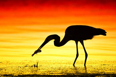 Photograph - Silhouetted Bird With Fish by Celso Diniz