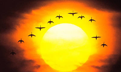 In A Row Photograph - Silhouetted Birds In Sunset by Panoramic Images
