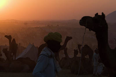 Camel Photograph - Silhouetted Dromedary Camels At Dusk by Steve Winter