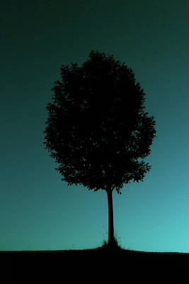 Photograph - Silhouetted Tree Against Cyan Sky by Emrold