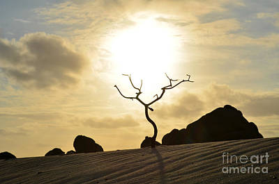 Silhouetted Tree At Dawn In Aruba Art Print
