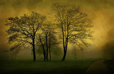 Giuseppe Cristiano - Silhouetted Trees by Svetlana Sewell