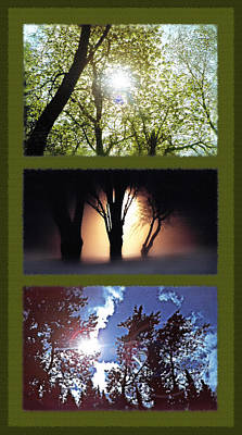 Creepy Mixed Media - Silhouetted Trees Triptych by Steve Ohlsen