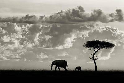 Savannah Nature Photograph - Silhouettes Of Mara by Mario Moreno