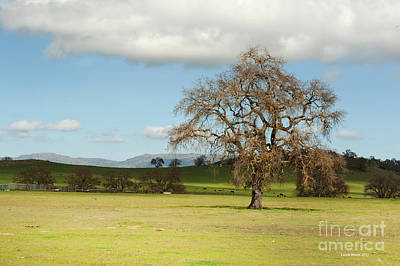 Photograph - Silicon Valley Hills by Artist and Photographer Laura Wrede