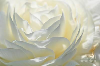 Silk Cream Floral Art Print by Elaine Manley