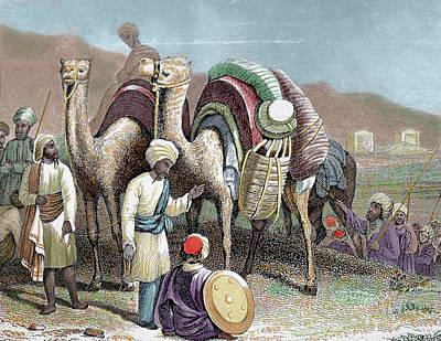 Camel Photograph - Silk Road Caravan Of Camels Resting by Prisma Archivo