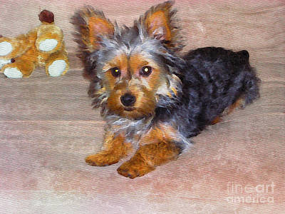 Silky Terrier - Watercolor Art Print by Scott Hervieux