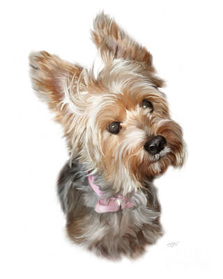Yorkie Digital Art - Silky Terrier by Paul Tagliamonte