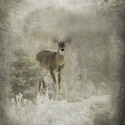 Whitetail Deer Wall Art - Photograph - Sillent Watcher by Susan Capuano
