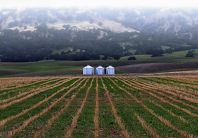 Photograph - Silos In Dunnigan Hills by Robert Woodward