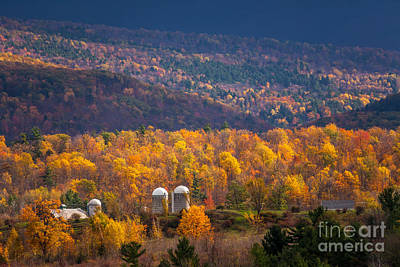 Photograph - Silos In Gold by Susan Cole Kelly