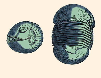 Photograph - Silurian Trilobite by Science Source