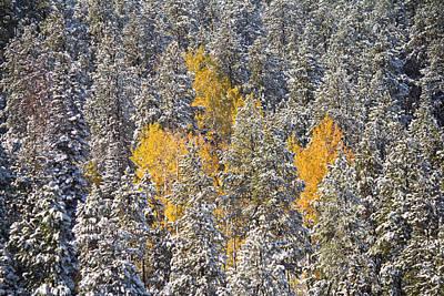 Silver And Gold - Casper Mountain - Casper Wyoming Original
