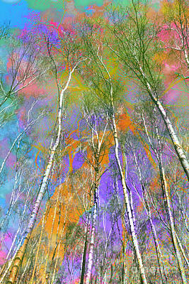 Silver Birch Print by Michelle Orai