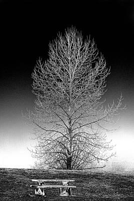 Silver Birch Art Print by Phil Dyer