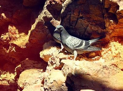 Silver Birds Art Print