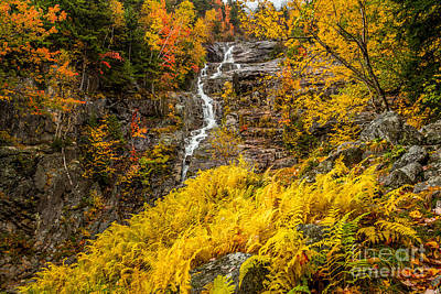 Photograph - Silver Cascade In Gold by Susan Cole Kelly