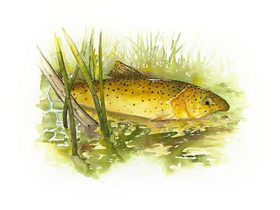 Silver Creek Apache Trout Print by Joel DeJong