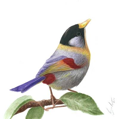 Painting - Silver-eared Mesia by Bruce Lennon