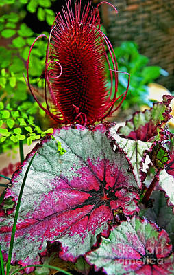 Photograph - Silver Edged Rex Begonia Plant Art Prints by Valerie Garner