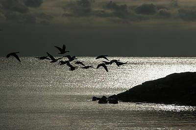 Photograph - Silver Flight by Georgia Mizuleva