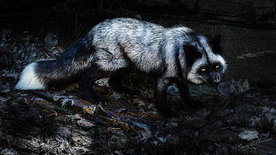 Silver Moonlight Photograph - Silver Fox by Tracy Munson