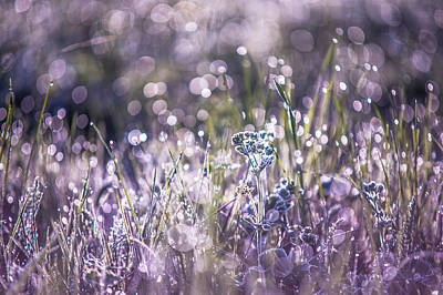 Diamond Necklace Photograph - Silver Grass 1. Small Natural Wonders by Jenny Rainbow
