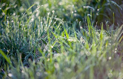 Diamond Necklace Photograph - Silver Grass 2. Small Natural Wonders by Jenny Rainbow